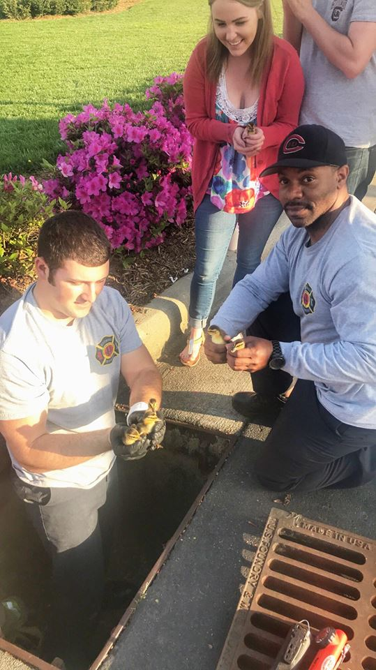 ENGINE 2 RESCUES DUCKLINGS