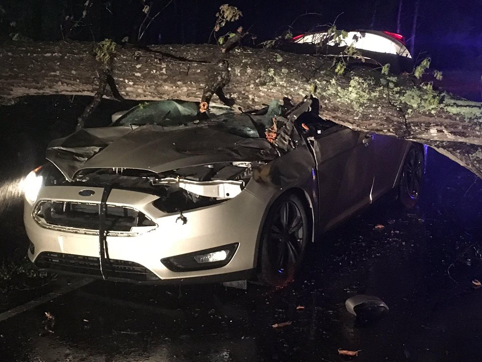 MVA INVOLVING A FALLEN TREE